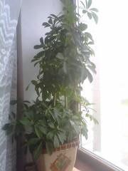 Декоративные растения,  Николаев