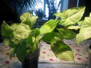 Растения для вашего дома и сада