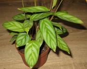 Комнатные растения,  кактусы,  суккуленты
